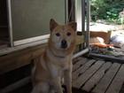 組長犬 1